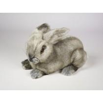 Rabbit 0721 by Piutrè
