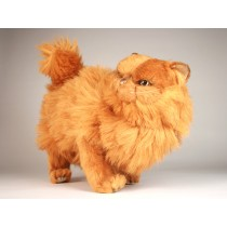 Red Persian Cat 2452 by Piutrè