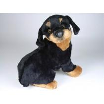 Rottweiler Puppy 2259 by Piutrè