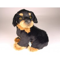 Rottweiler Puppy 3309 by Piutrè
