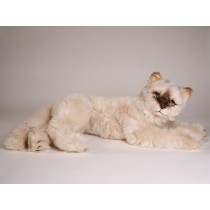 Seal Point Himalayan ​Cat ​2364 by Piutrè