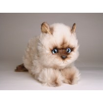 ​Seal Point Himalayan ​Kitten ​2368 by Piutrè