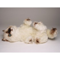 ​Seal Point Himalayan ​Kitten 23​67 by Piutrè