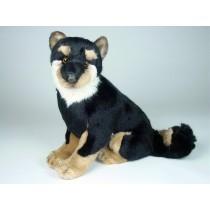 Shiba Inu Puppy 3369 by Piutrè
