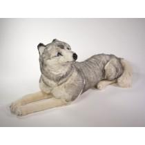 Siberian Husky 2212 by Piutrè