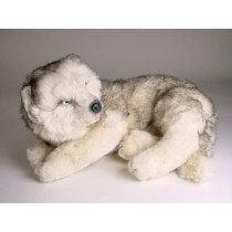 Siberian Husky Puppy 2213 by Piutrè