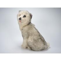 Siberian Husky Puppy 2215 by Piutrè
