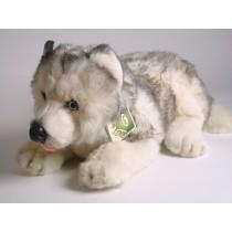 Siberian Husky Puppy 2216 by Piutrè