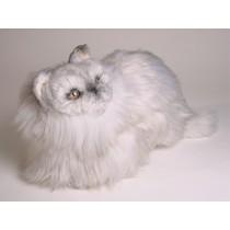 Silver Persian Kitten 2425 by Piutrè