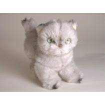 Silver Persian Kitten 2426 by Piutrè