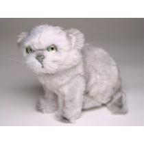 Silver Persian Kitten 2427 by Piutrè