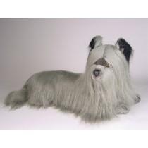 Skye Terrier Puppy 1269 by Piutrè