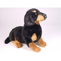 Smooth Dachshund Puppy 1212 by Piutrè