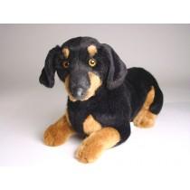 Smooth Dachshund Puppy 1213 by Piutrè