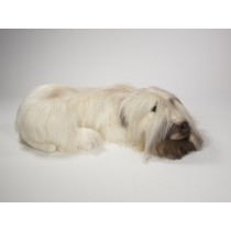 Soft-Coated Wheaten Terrier 0255 by Piutrè