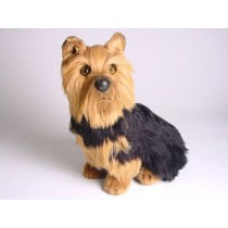 Yorkshire Terrier 3298 by Piutrè
