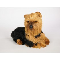 Yorkshire Terrier 3299 by Piutrè