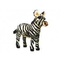 Zebra Colt 2679 by Piutrè