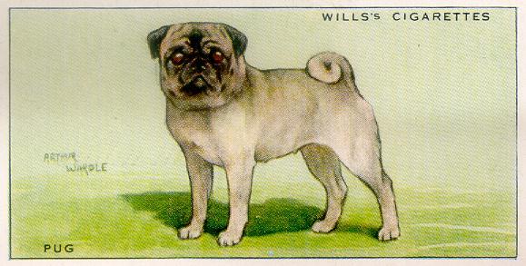 Pug - Wills Cigarette Card (1937)